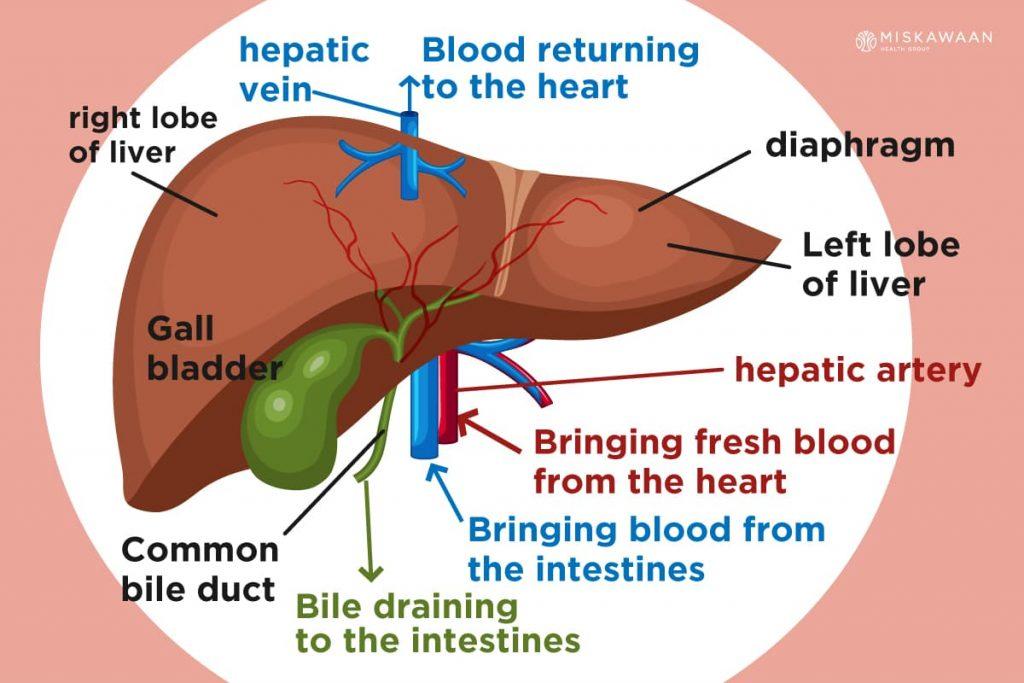 cancer in hepatic vein